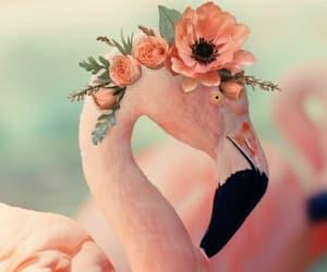 animali, fiori, and natura image