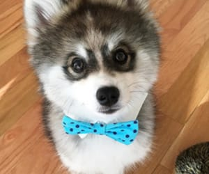 dog, lovely, and pretty image