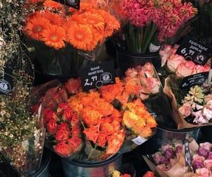 amazing, girly, and roses image