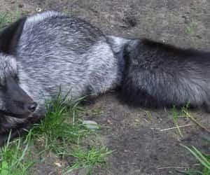 fox, nature, and photo image