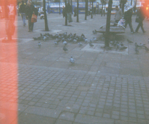 birds, city life, and disposable camera image