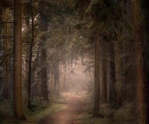 enchanted forest, forest, and nature image