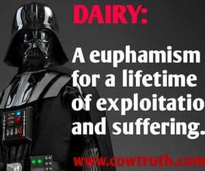 abuse, dairy, and suffering image