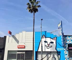 cat, supreme, and palm trees image