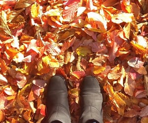 autumn, feet, and leaves image