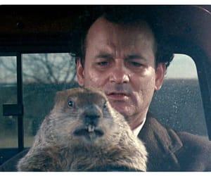 groundhog day, bill murray, and film image