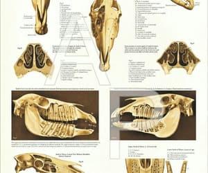 anatomy, animals, and goals image