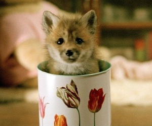 cute, fox, and cup image