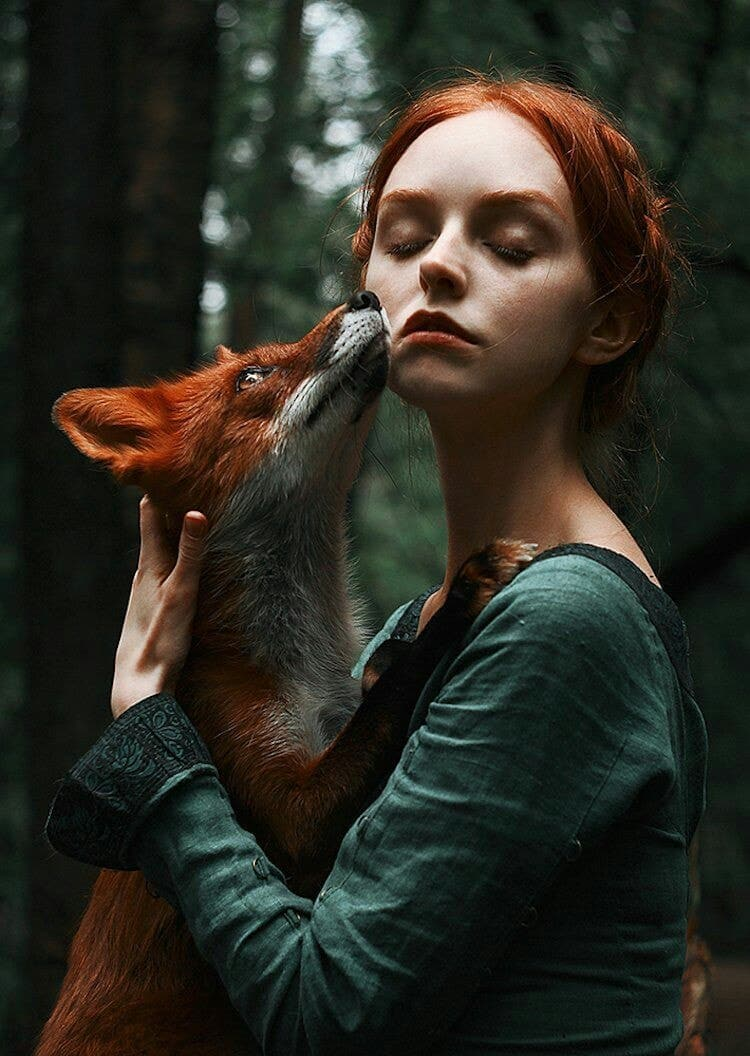fox, nature, and forest image