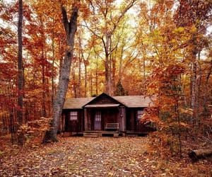 autumn, tree, and cabin image