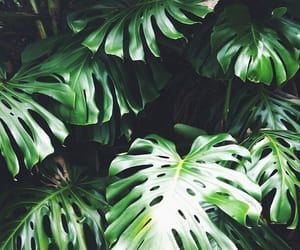 green, leaves, and photography image