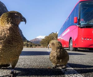 new zealand, tours, and travel image