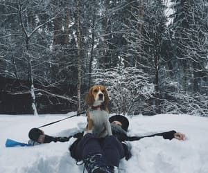 beagle, snow, and winter image