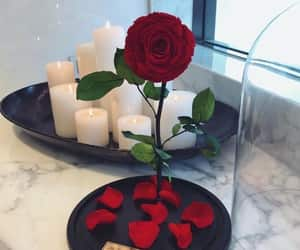 red, beautiful, and rose image