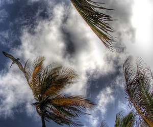 hdr, puerto Vallarta, and palm trees image