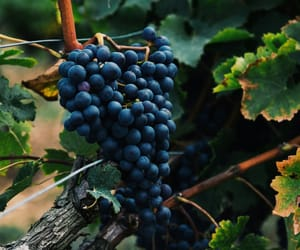 delicious, FRUiTS, and grapes image