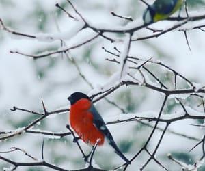 animals, winter, and birds image