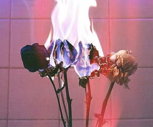 fire and rose image