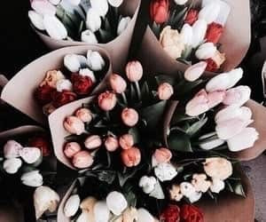 flowers and tulips image