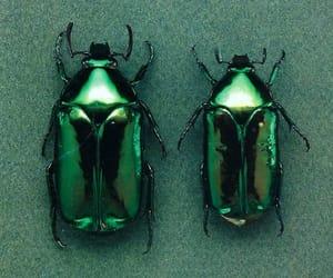 bug, green, and beetle image