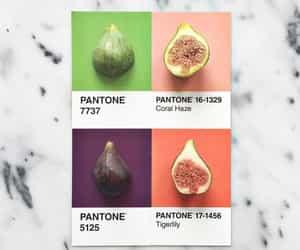 figs and pantone image