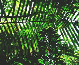 aesthetic, green, and nature image