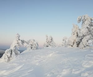 finland, nature, and white image