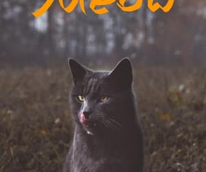 black, cat, and forest image