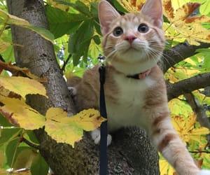 animals, autumn, and cat image