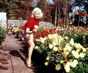 flowers, vintage, and Marilyn Monroe image