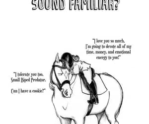 cheval, equestrian, and funny image