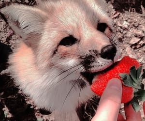fox, animal, and strawberry image