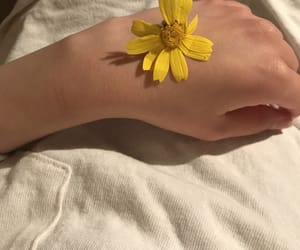 beautiful, flower, and hand image