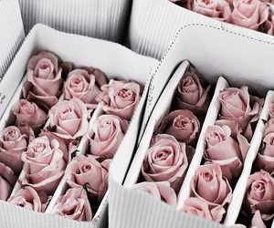 aesthetic, rose, and rose gold image