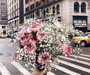 flowers, new york, and pink image