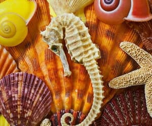 color, colors, and sea horse image