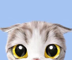 cat, kitten, and wallpaper image
