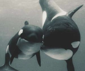 killer whales and sea life image