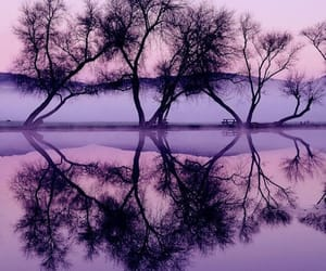 purple, tree, and hipster image