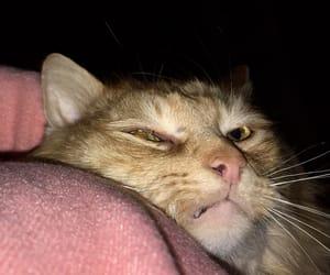 beautiful eyes, cat, and cute image