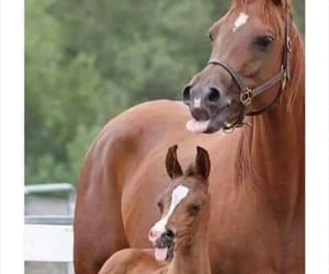 funny, animal, and horse image