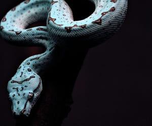 snake, animal, and blue image