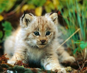 animal, adorable, and cat image