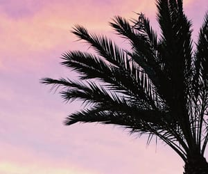 cyprus, palm tree, and pink image