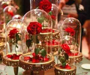 red and red roses image