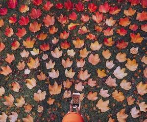 autumn, fall, and photo image