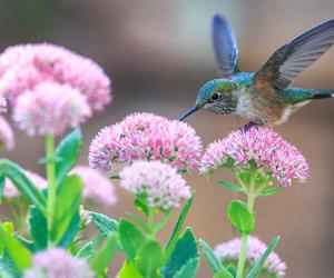 colibri image