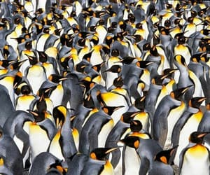 animal, environment, and national geographic image