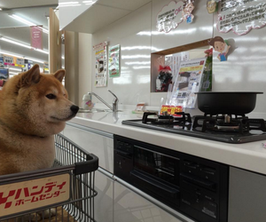 aesthetic, dog, and japan image