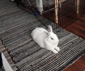 bunny, family, and pet image
